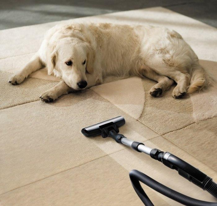 Гипоаллергенные собаки: как выбрать питомца при аллергии на животных?