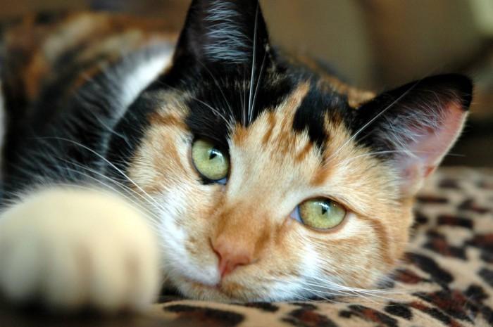 У кошки текут слюни: почему и что делать?