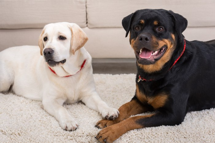 Красные точки на животе у собаки