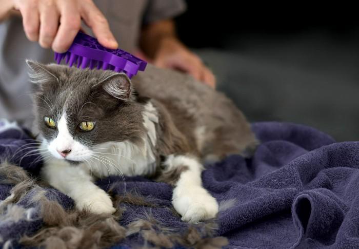 Кот сильно линяет, что делать: решаем проблему