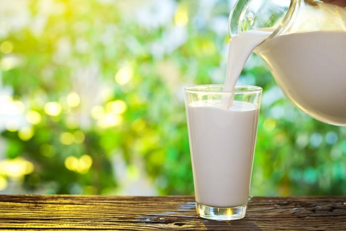 Овечье молоко – польза, подаренная природой