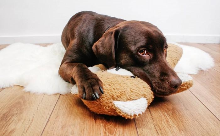 Что делать, если у собаки рвота с белой пеной