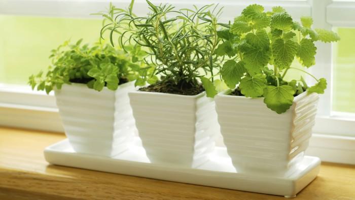 Как вырастить зелень на подоконнике, чтобы весь год быть с урожаем