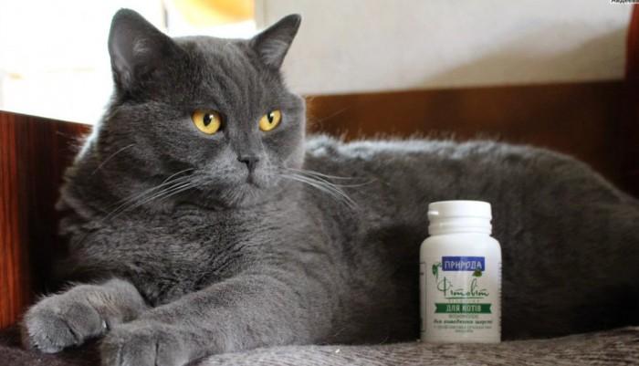 Витамины для котов: какой препарат выбрать и как правильно кормить питомца?