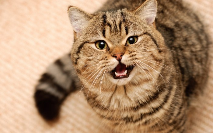 Особенности психологии кошек, о которых вы могли не знать
