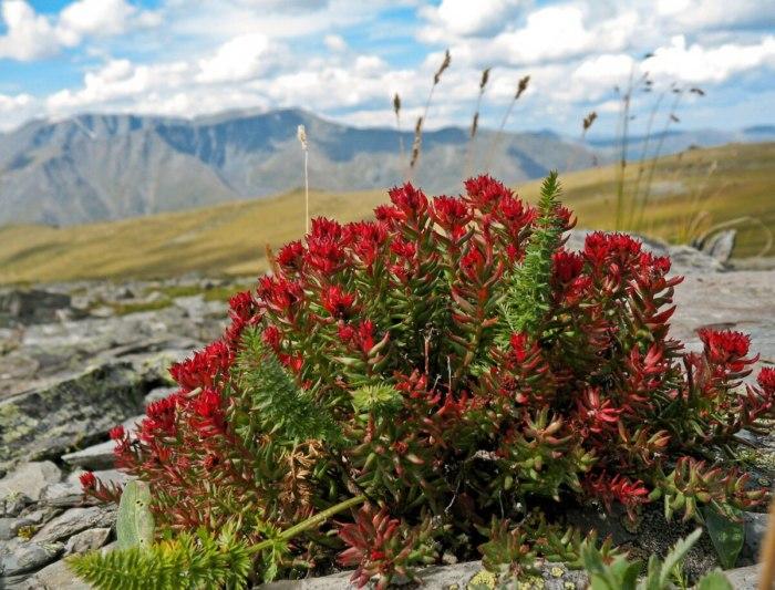 Исчезающие виды растений из красной книги РФ